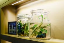 Idea Of Interior Home Decoration With Betta Fish Tank Decoration