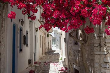 Fototapeta Gasse auf Samos, Griechenland