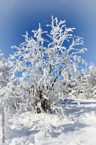 Vereister Baum Im Winter In Schneelandschaft Buy This Stock Photo