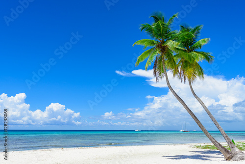 Staande foto Strand paradise tropical beach palm