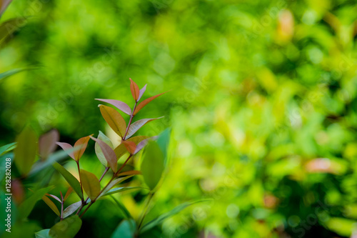 Fototapety, obrazy: Nature green leaf with green color bokeh background.