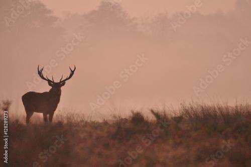 Deurstickers Hert Misty Red Deer