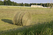 Freshly Cut Pastures Of Hay Rolled And Baled