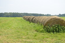 Freshly Cut Pastures Of Hay Ro...