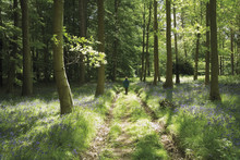 Forest Of Dean Gloucestershire...