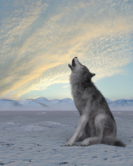 Fototapeta3d render of a howling wolf on winter snow background
