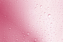 The Water Drop On Fresh Light Pink  Background