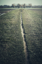 Lonely Path Leading In A Distance