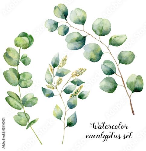 Akwarela zestaw eukaliptusowy. Ręcznie malowane elementy eukaliptusowe dla niemowląt, nasion i srebra. Kwiecista ilustracja z round liśćmi i gałąź odizolowywać na białym tle. Do projektowania i tekstyliów.