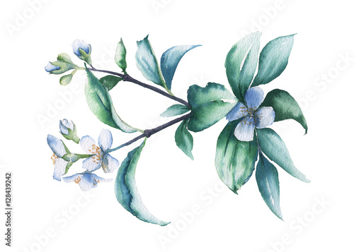 Fotografie, Obraz  Branch of Jasmine