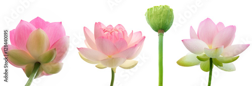Poster de jardin Nénuphars Water lily flowers on white background