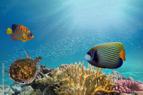 Papiers peints Recifs coralliens Deep sea and coral reef, coral reef animals,