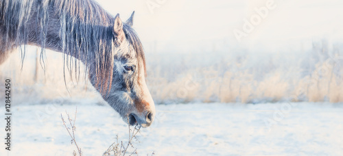 Horse head at frosty winter day nature background, banner
