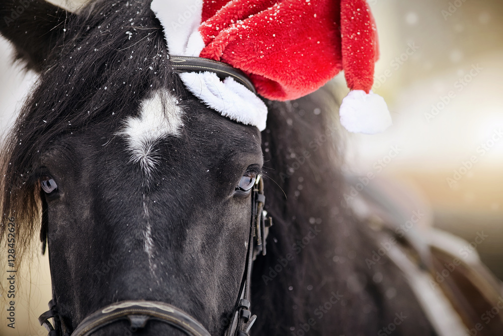 Portrait of a horse in a a red Santa Claus hat
