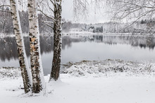 White Winter Landscape Lake In The Forest