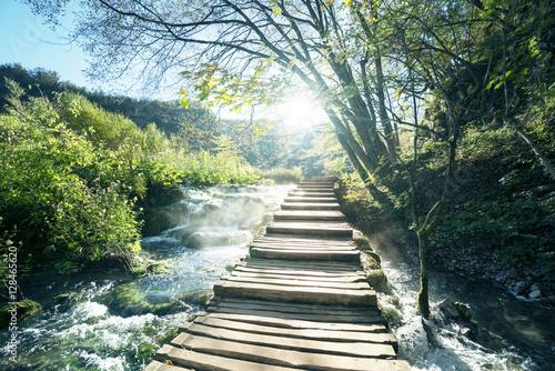 Fototapeta premium droga w lesie, Jeziora Plitwickie, Chorwacja