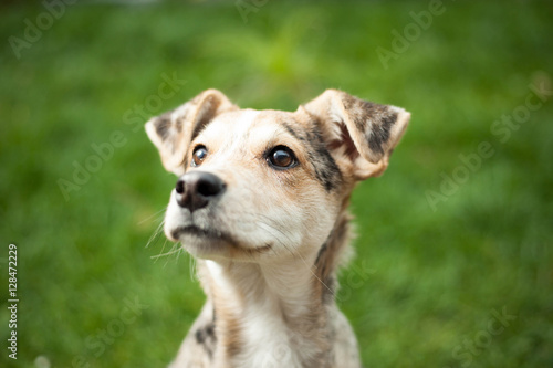 Photo Young brown mix-dog lying on the grass at huge garden (color ton