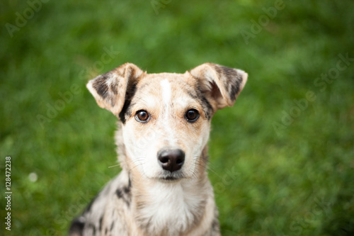 Fotografia Young brown mix-dog lying on the grass at huge garden (color ton