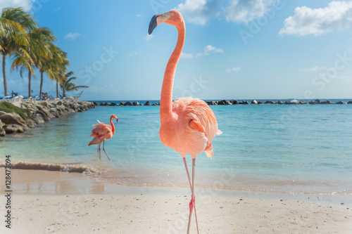 Vászonkép Three flamingos on the beach