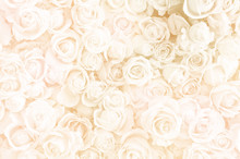 Blurred Of Sweet Roses In Pastel Color Style On Soft Blur Bokeh