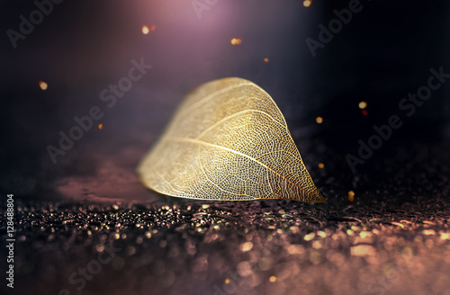 Türaufkleber Makrofotografie Beautiful golden transparent skeleton leaves with texture on shiny abstract background blurred with round bokeh water drops close-up macro. Bright expressive elegant artistic image.