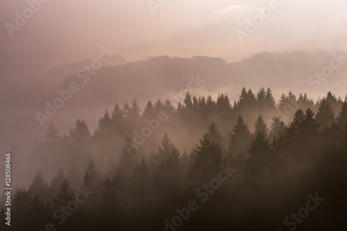 Foto op Canvas Zalm Foggy landscape with trees