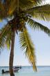 Akumal Caribbean beach - Mexico Mayan Riviera