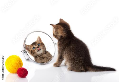 Spoed Foto op Canvas Tijger The kitten with blue eyes looks in a mirror. Cat looking into
