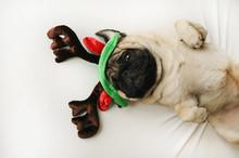 Cute Pug Dog In Christmas Elk Horns