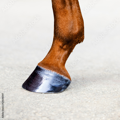 Horse leg with hoof. Skin of chestnut horse. Animal hoof close-up. Square format.