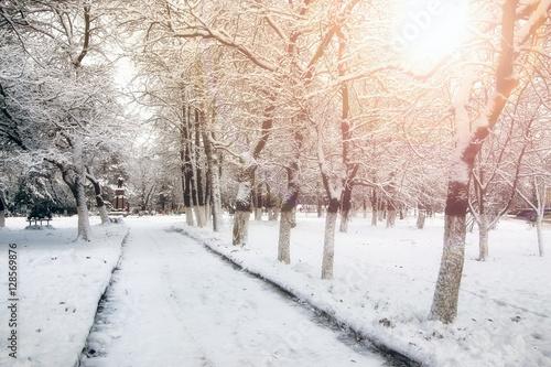 Aluminium Prints Landscapes park alley tree way winter