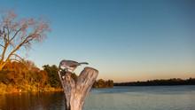 Tufted Titmouse Of Stump By Lake Sundown