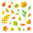 Big set of cute leaves from different trees on white