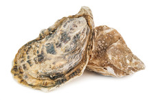 Two Oysters On White