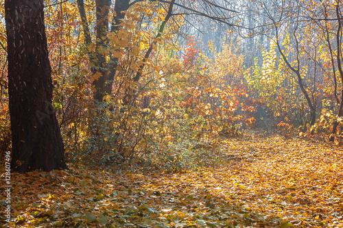 Stickers pour porte Orange eclat Autumn Forest frosty sunny morning. Landscape. Nature