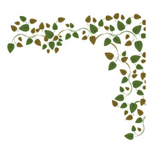 Border Side With Ivy And Leaves Vector Illustration