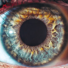 Macro Eyes Pupil Iris Oculist ...
