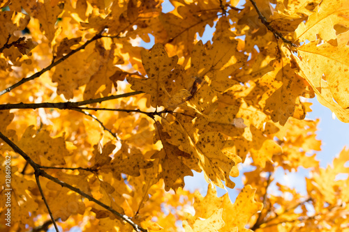 Poster  Autumn leaves/Autumn leaves