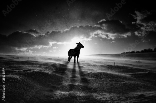 Valokuva  Alone dog standing in nature during winter blizzard