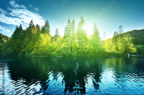 Poster Lac / Etang lake in forest, Croatia, Plitvice