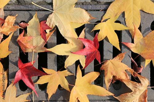 Fotografia, Obraz  alcantarilla hojas desagüe otoño U84A0075-f16