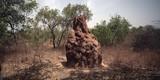 Fototapeta Sawanna - afrykańska sawanna - kopiec termitów