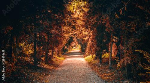 Fototapety, obrazy: Tree lined road