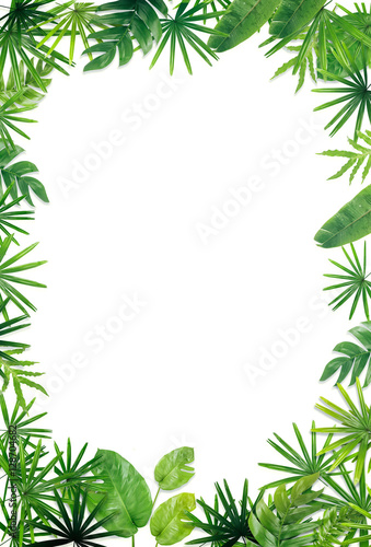 Fotografía  Green leaf border background