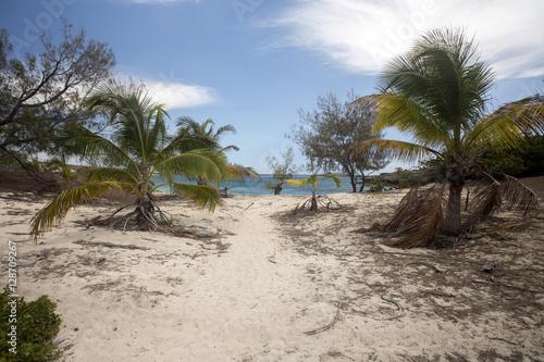 Garden Poster Natural Park Coastal vegetation Indian Ocean. Amoronia orange bay, north of Madagascar