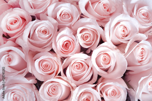 Foto op Aluminium Roses Pink roses as a background