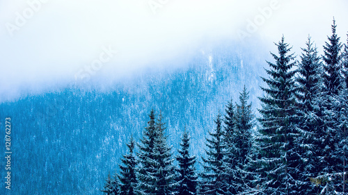 pine forest in winter mountains - 128762273