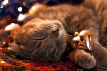 Cat In Christmas Toys And Garl...