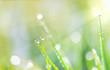 Grashalme mit Wassertropfen im Sonnenlicht