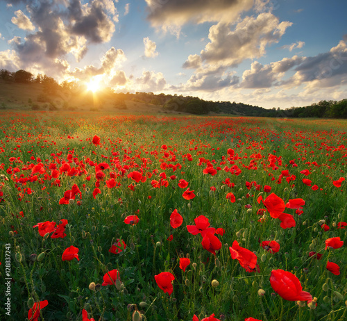 Stickers pour portes Orange eclat Poppy meadow landscape